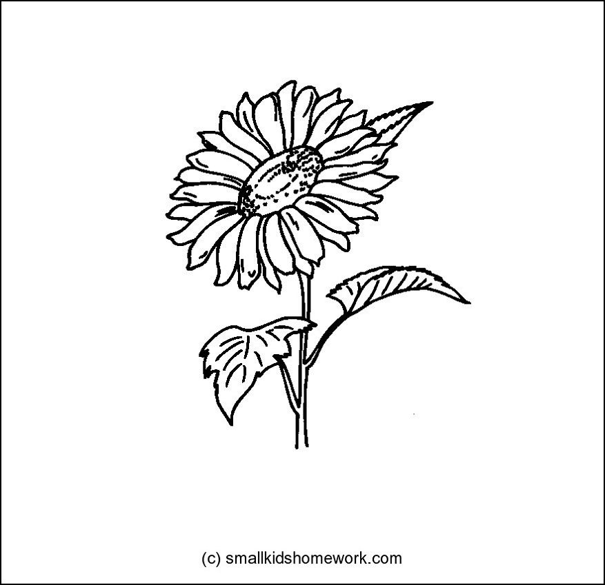 Sunflower Flower Outline Sunflower Outline And Flower Outline Tattoos Sunflower Tattoos