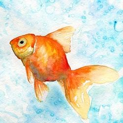 Goldfish In Water Colors A Few Process Photos Capture The
