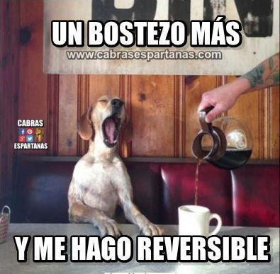 Bostezo Uno Más Y Me Hago Reversible Humor Pinterest