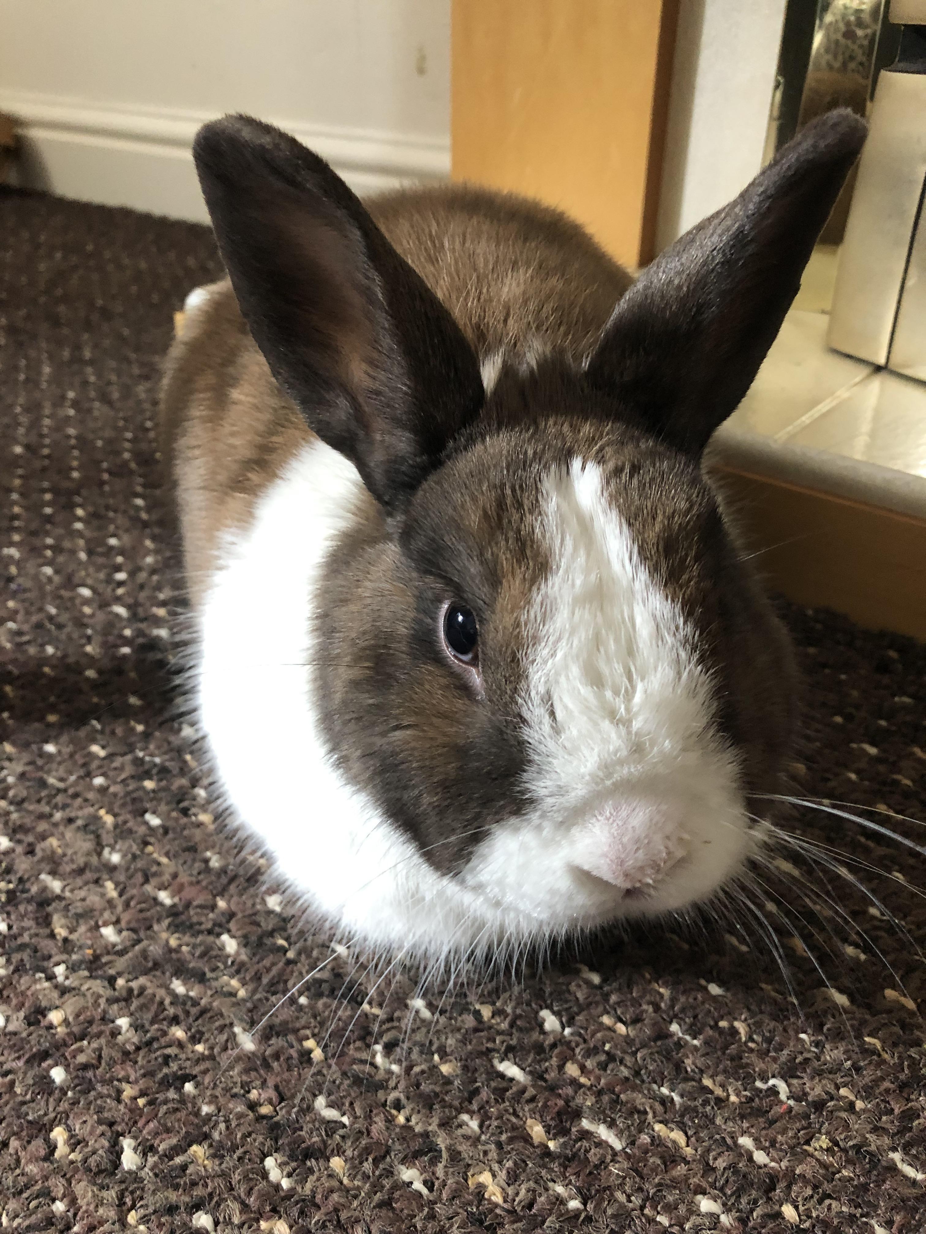 Pin On Bunny Tips