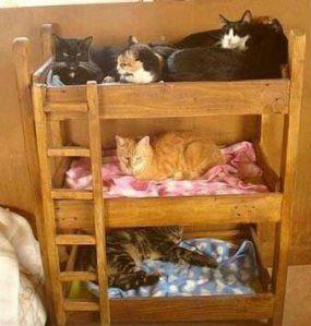 lits superpos s pour chiens base de palettes cat. Black Bedroom Furniture Sets. Home Design Ideas