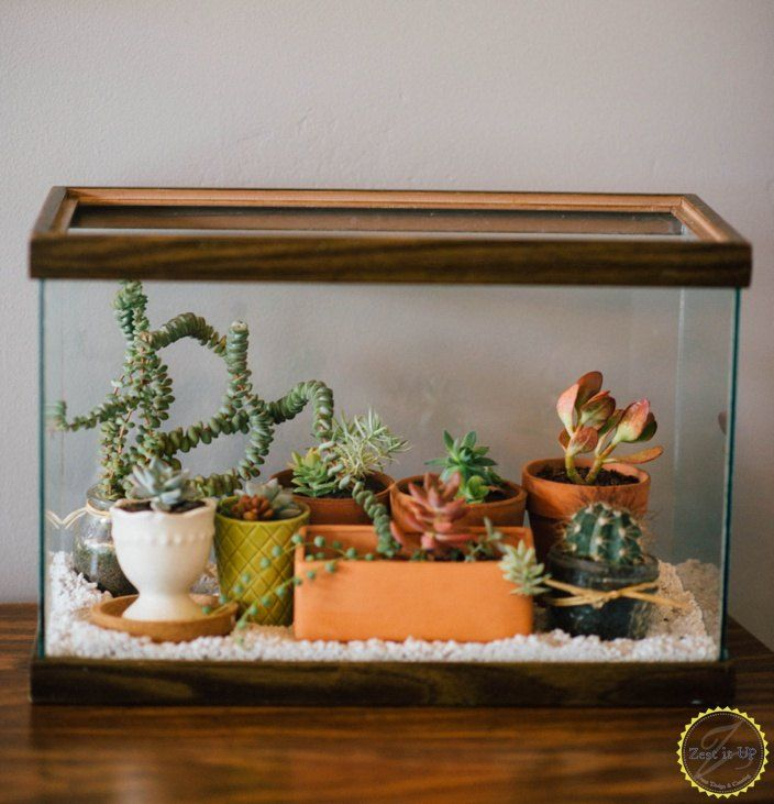 Easy Diy Terrarium From An Old Fish Tank Gardening And Ponds