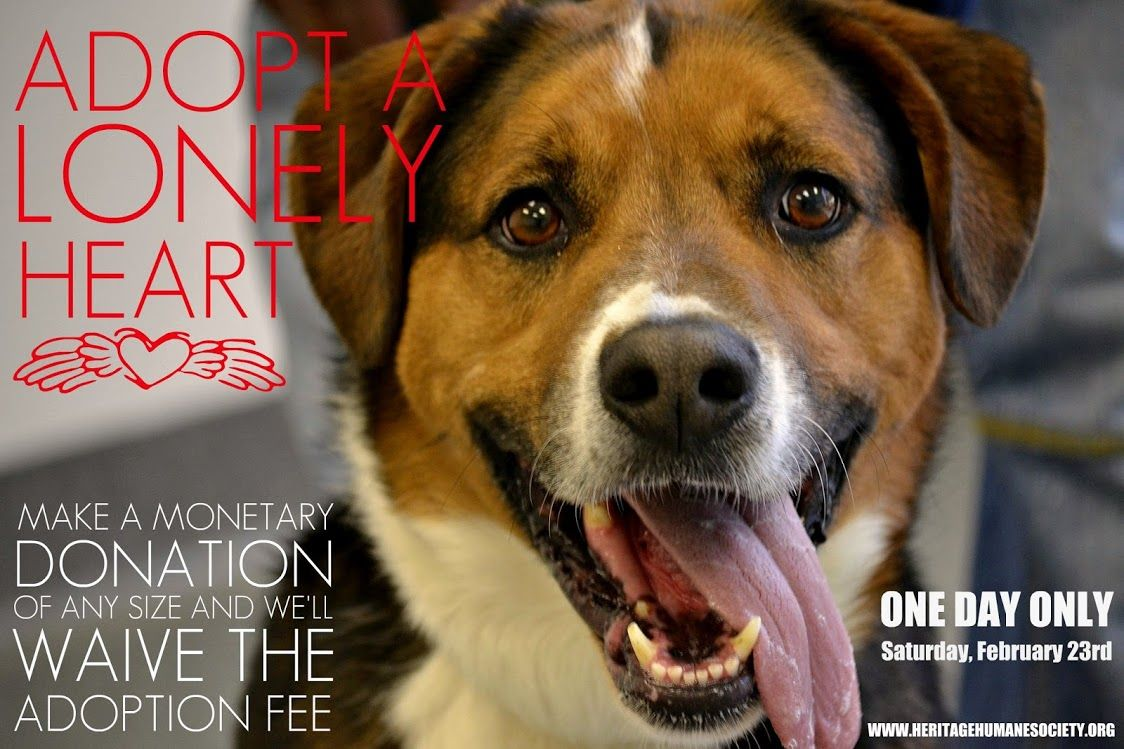 14++ Lonely hearts animal rescue ideas