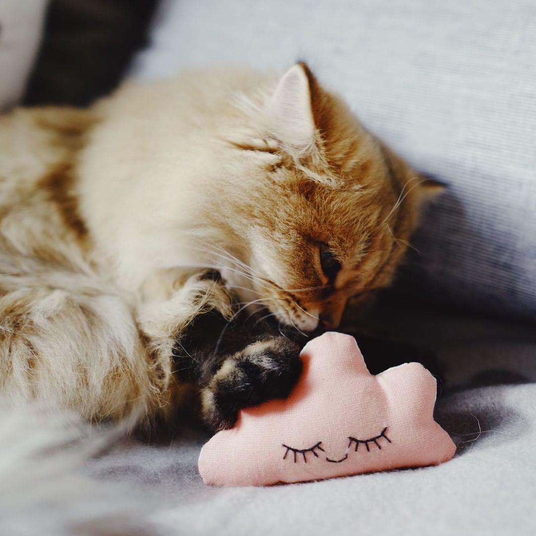 Only Milk On Instagram Oasis Garde Son Ame De Chatonne Elle Adore Les Doudous Je Me Souviens Que Petite Chez Magali Britishdozara Cat Feline Feline Cats