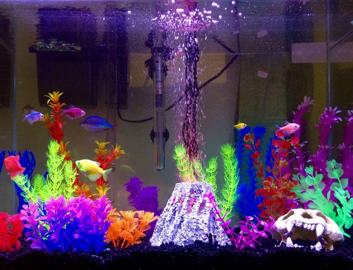 My Fully Stocked Glofish Tank Fish Tank Themes Fish Tank Decorations Fish Aquarium Decorations