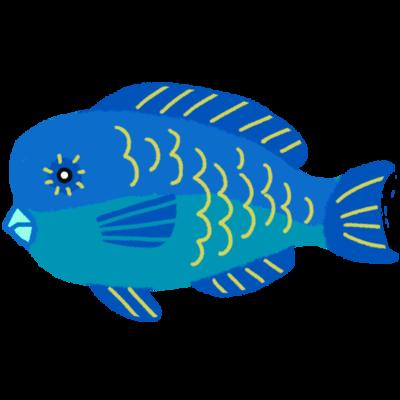 イラブチャー アオブダイ属の魚 やハイビスカスはもちろん 沖縄のイラスト なら何でもそろう無料の素材集 かわいい系 キレイ系 紅型風などタッチも選べて 使いやすいイラストが盛りだくさん 個人利用 商用利用ok 加工もok 沖縄 イラスト 海 イラスト 沖縄