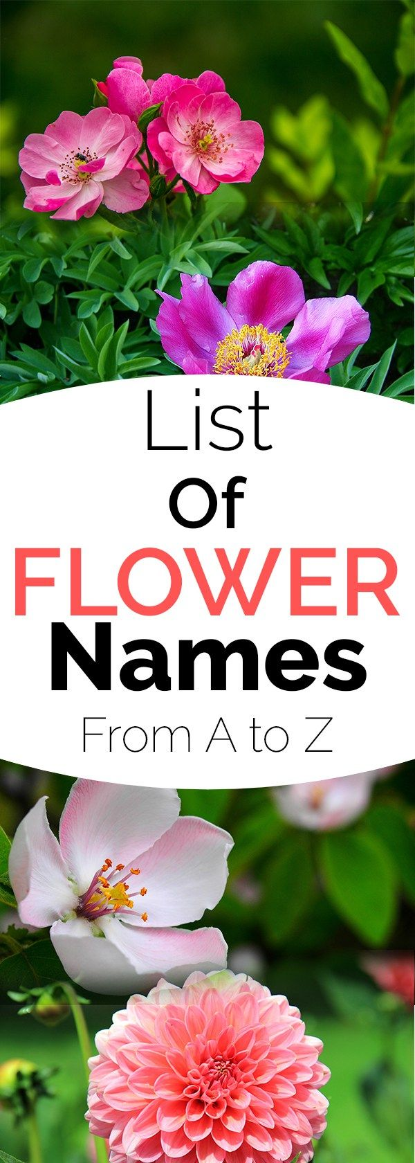 List of Flower Names, from A to Z Flowers name list