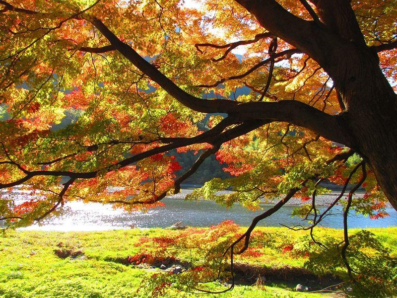 Autumn of Japan