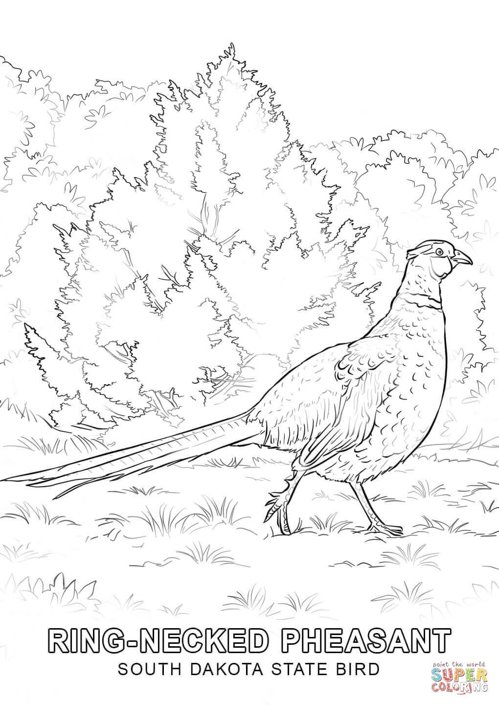 South Dakota State Bird Coloring Page Free Printable Coloring