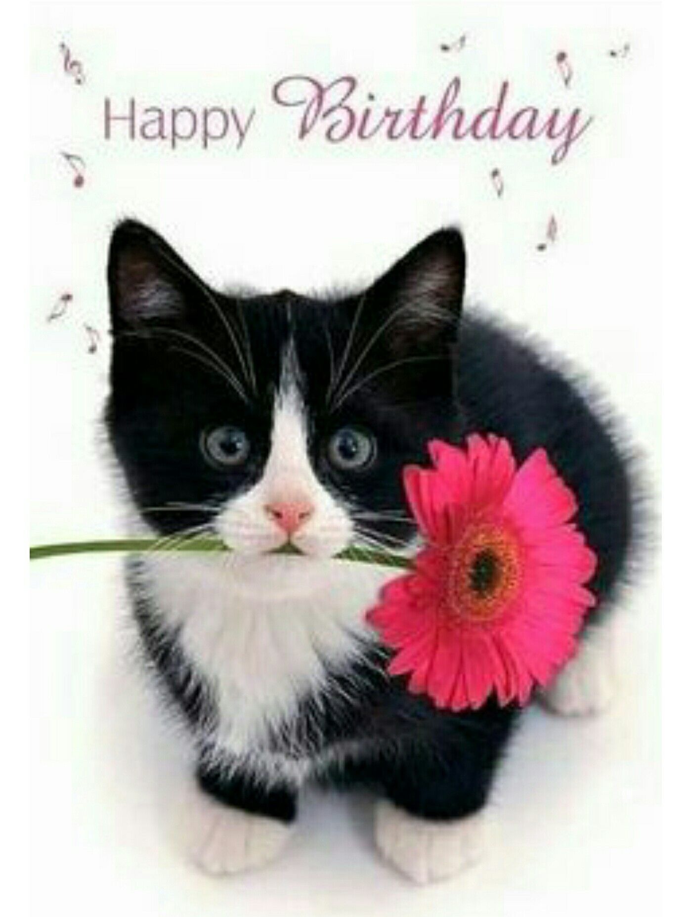 Happy birthday cat #happybirthdayimages | Happy birthday cat ...