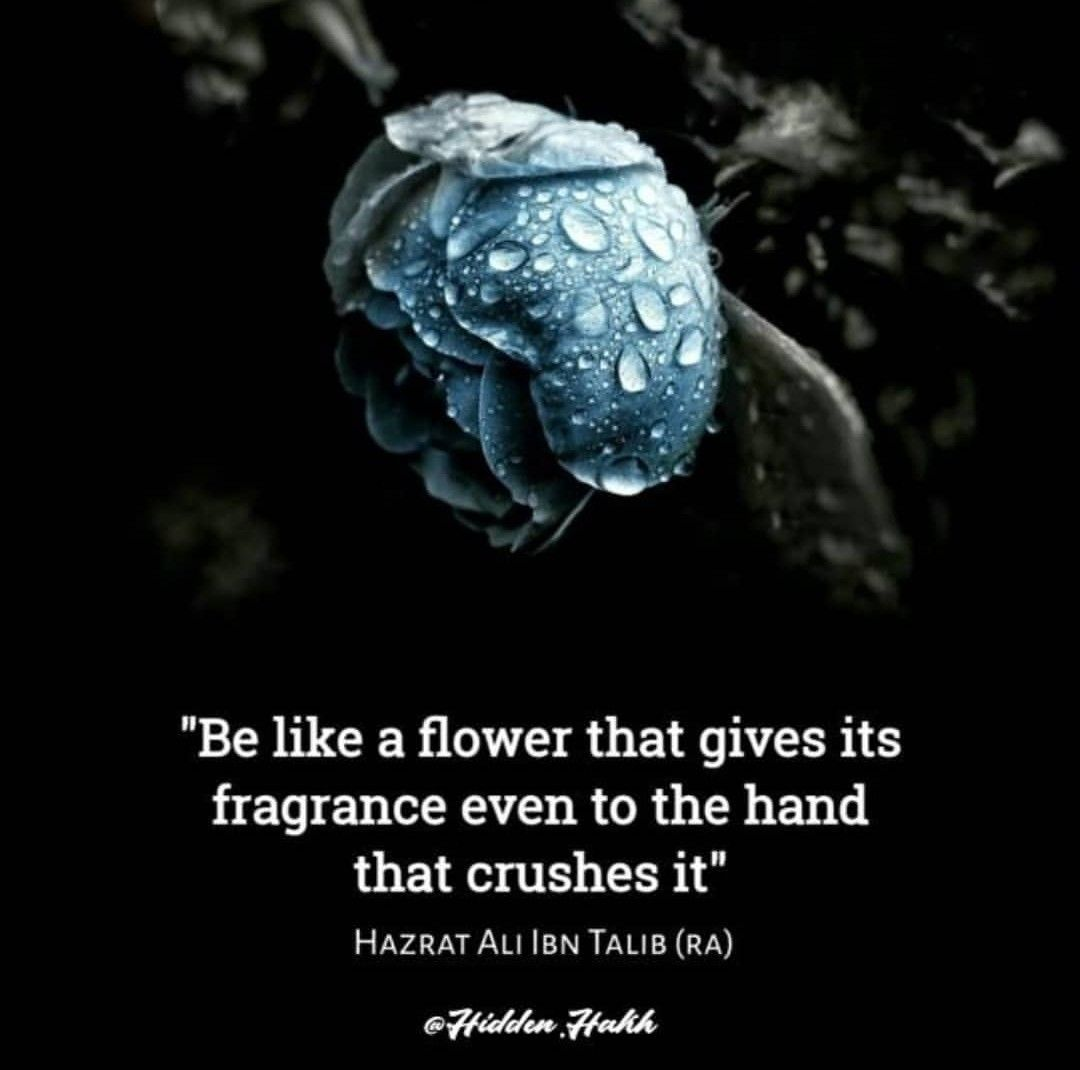 be like flower hazrat ali r a images islamic quotes