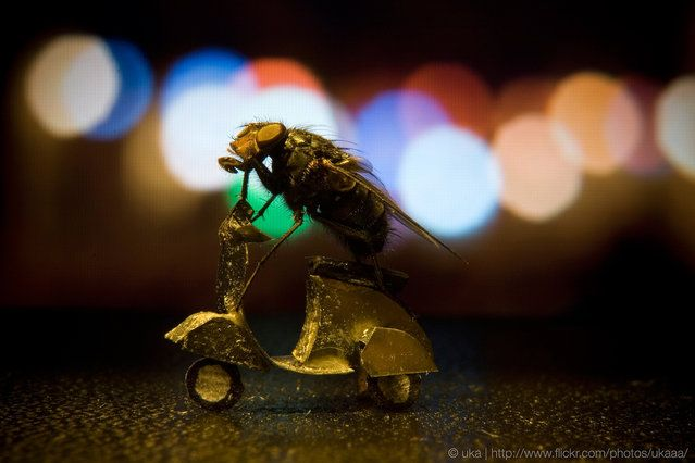 The Adventures of Mr. Fly is a series featuring a dead fly doing people-type things. You know, like skateboarding, building a snow man, and sunbathing. NOT like texting while driving, singing in the shower, and Googling your own name. The photos were posed and shot by artist and photographer Nicholas Hendrickx