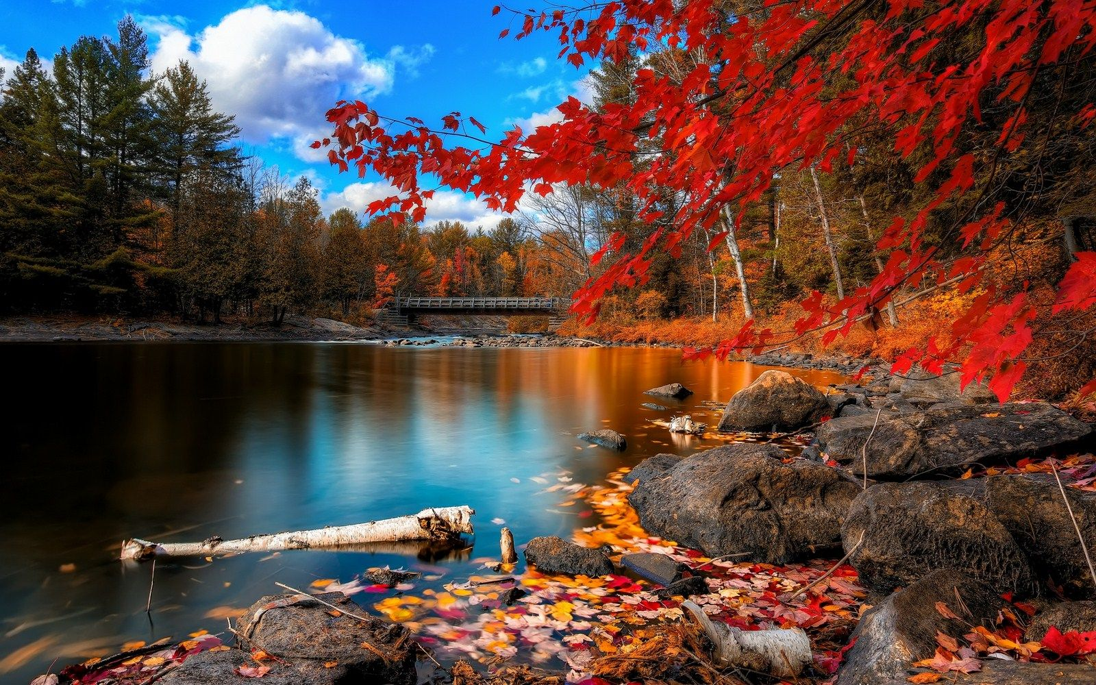 Fall Forest Beautiful Nature Scenery Wallpaper Scenery