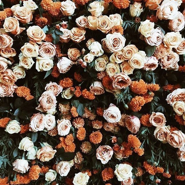 Flower Roses Pinterest: Pin By Αℓєиα On Αυтυми