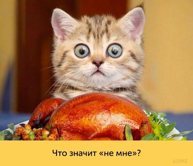 смотреть фото кошки