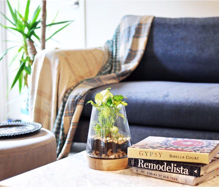 Tamara Armstrong on Instagram: 'My Houzz: Designer Breathes New Life Into a Gold Coast Home' -...