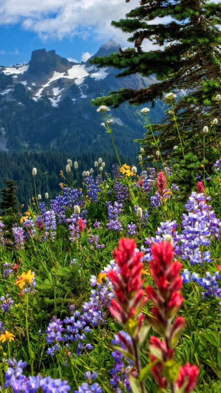 Wildflowers iPhone 6 Wallpaper 37110 Flowers
