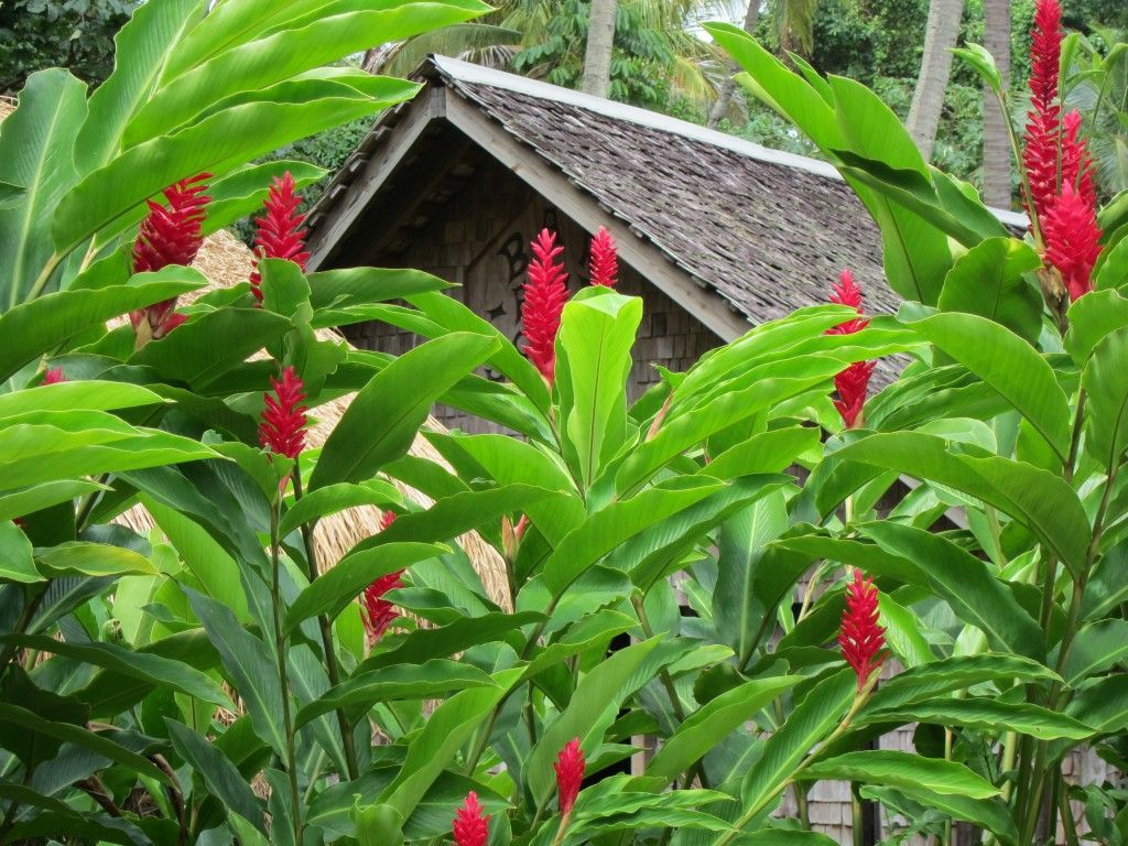 Capture The Colour Write Around Here Ginger Plant Tropical Backyard Plants