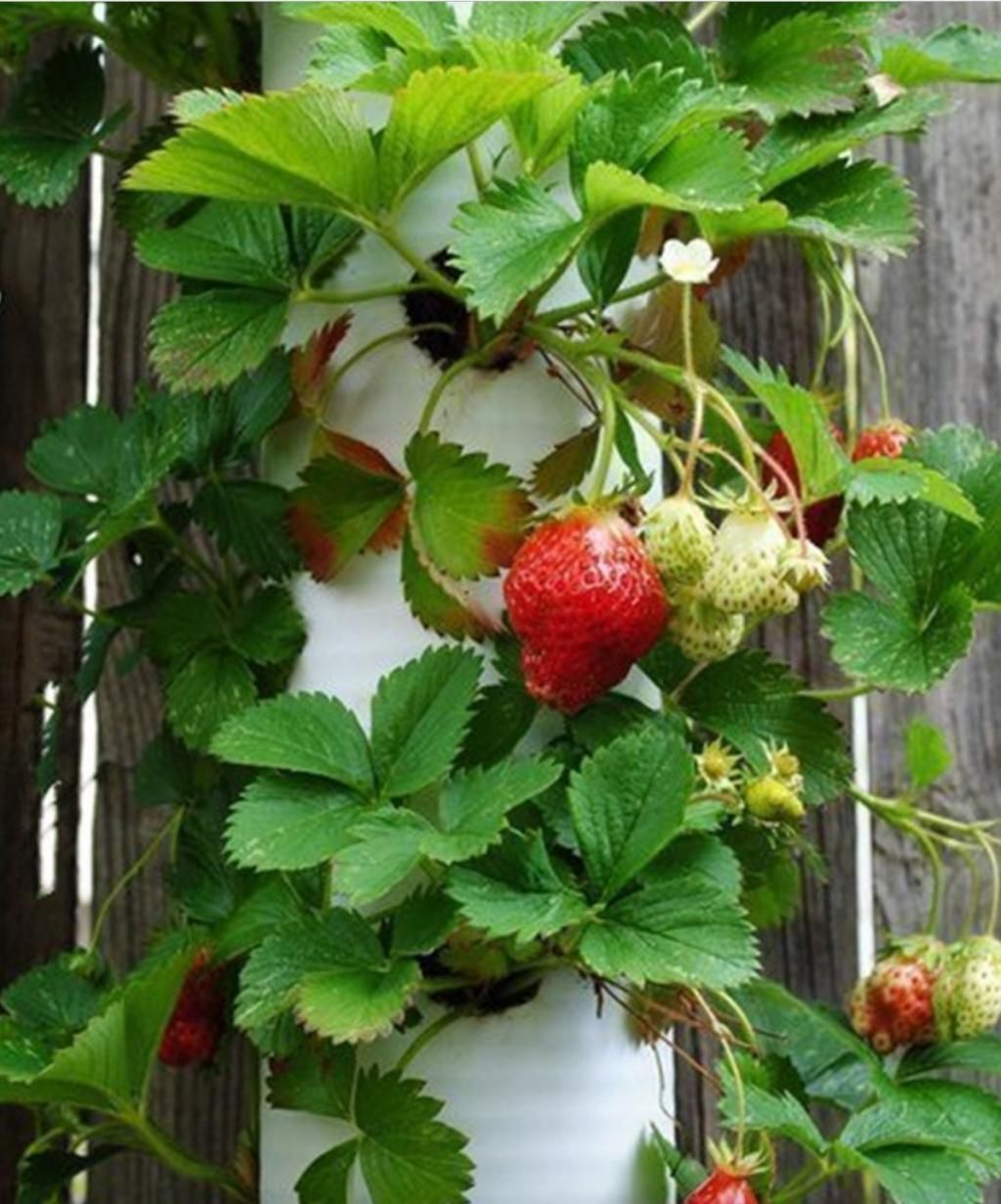 Medium Of Pvc Pipe Gardening Projects