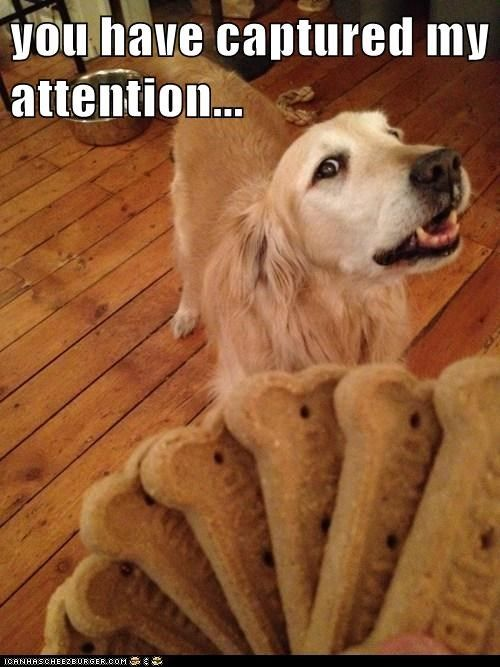 Oh Yes We Know How Our Golden Retrievers Love Their Food And There