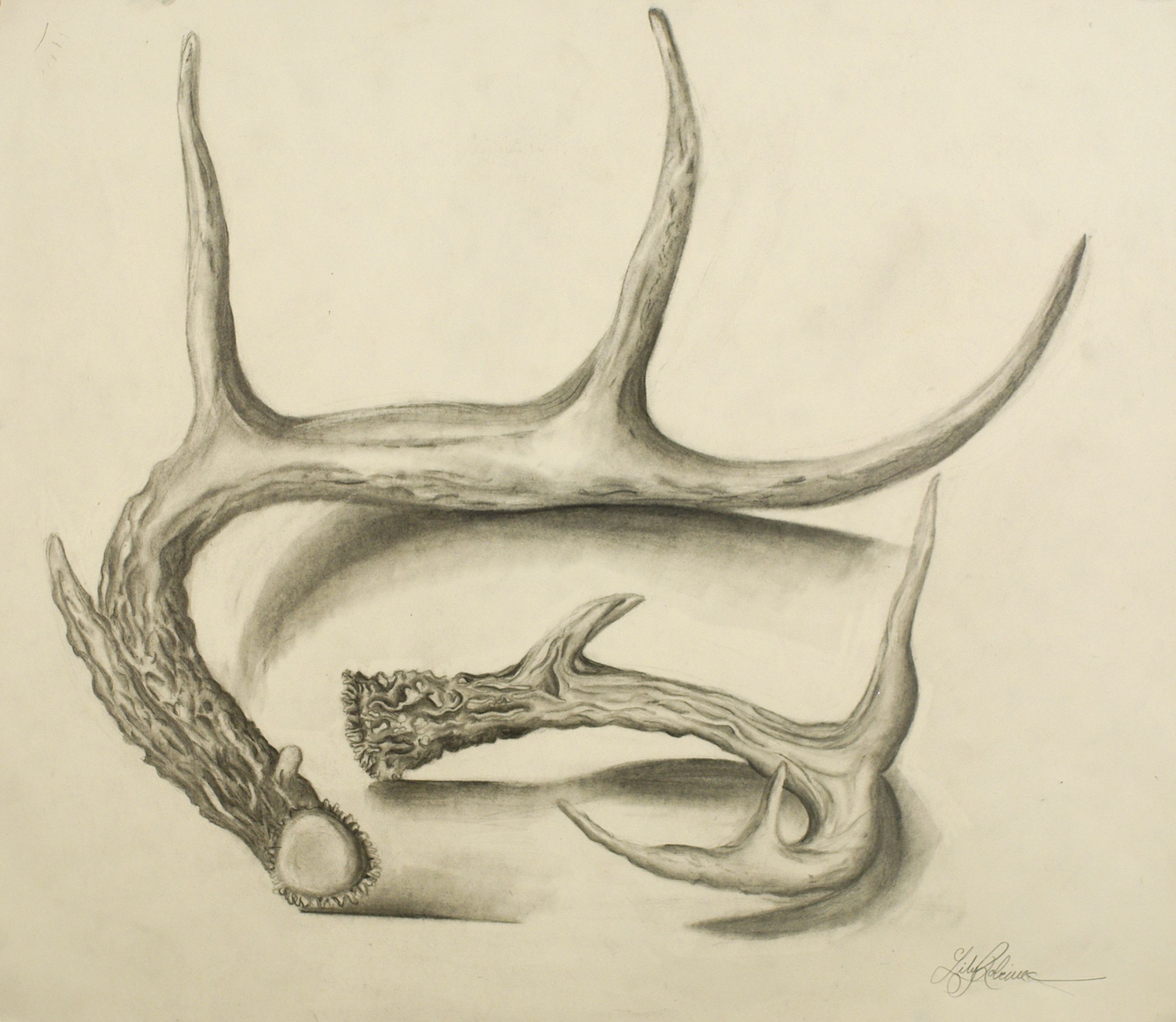 pencil contour line drawing of a deer antler google