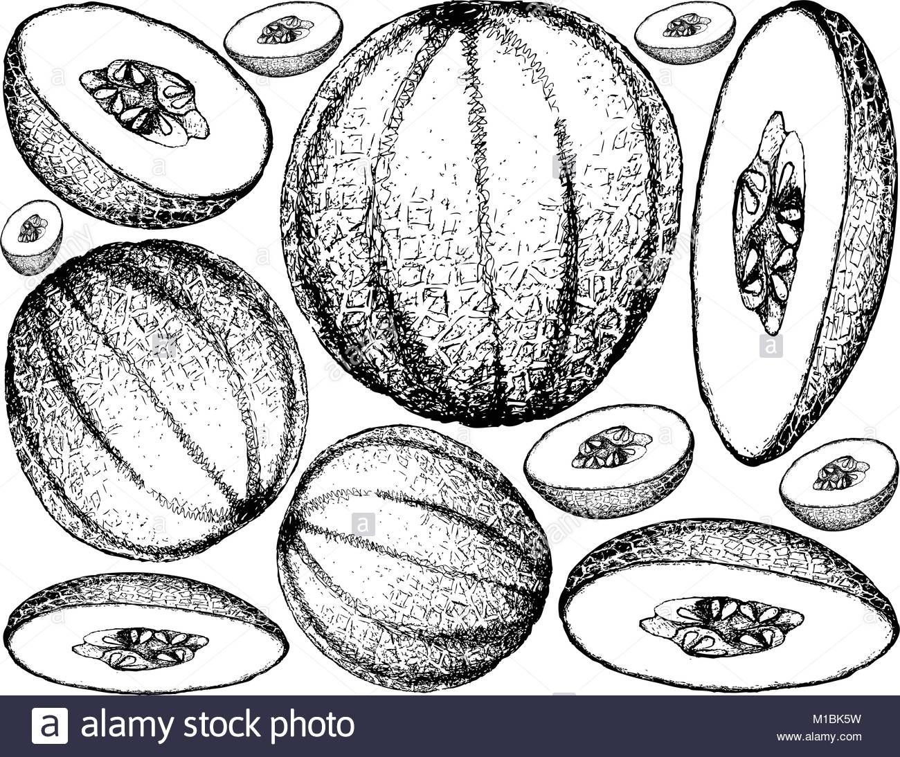Pin On رسم Cantaloupes are packed with vitamins a and c, and since they have high water content, they are one cup of cantaloupe contains only about 55 calories (due to its high water content) but offers over. pin on رسم