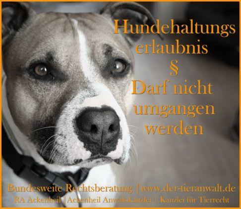 American Staffordshire Terrier Listenhund Kampfhund