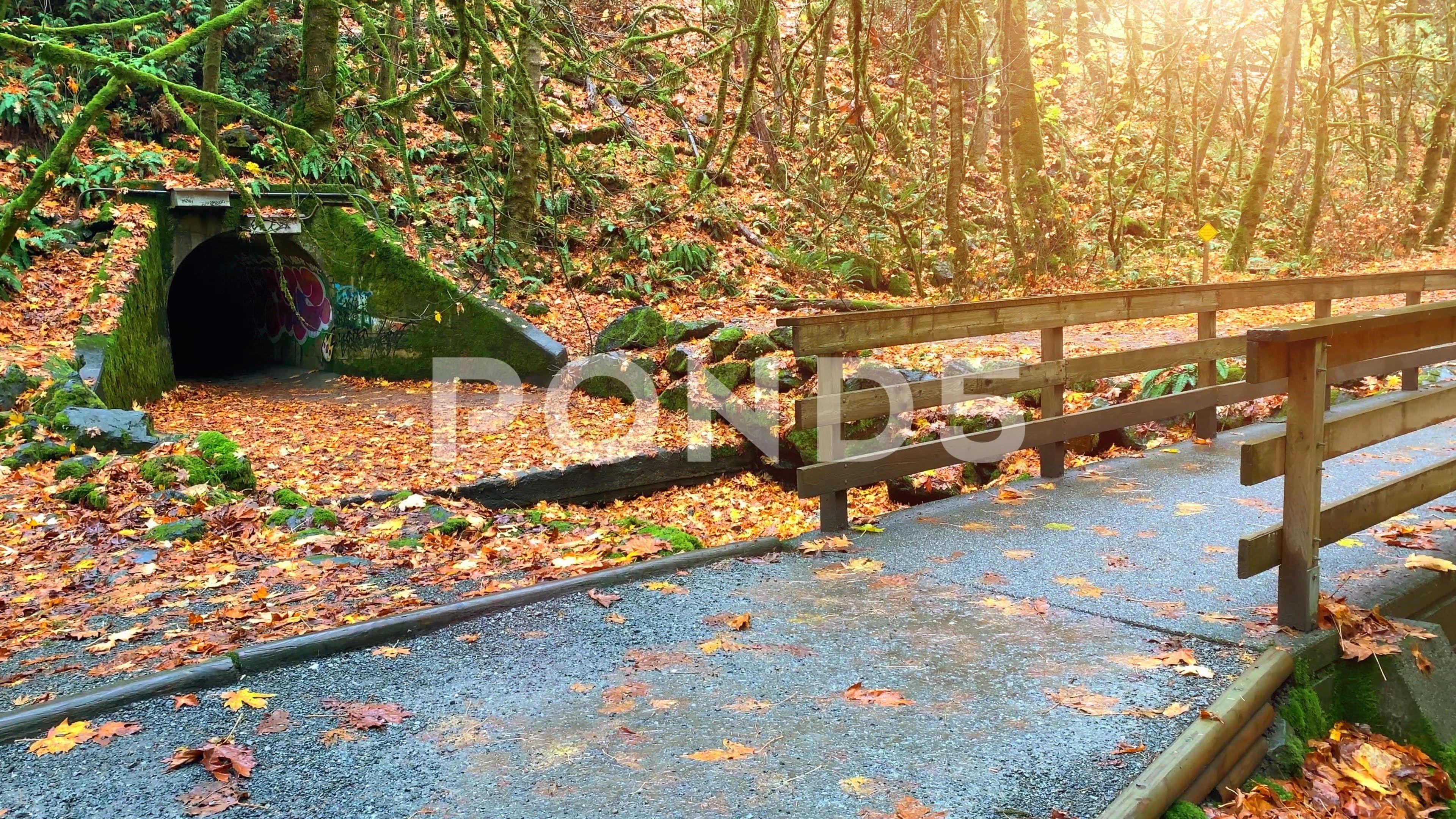 Beautiful Fall Autumn Nature Bridge Landscape Park Yellow Red Maple Leaf Bridge Stock Footage Ad Nature Bridge Lands With Images Autumn Nature Beautiful Fall Landscape