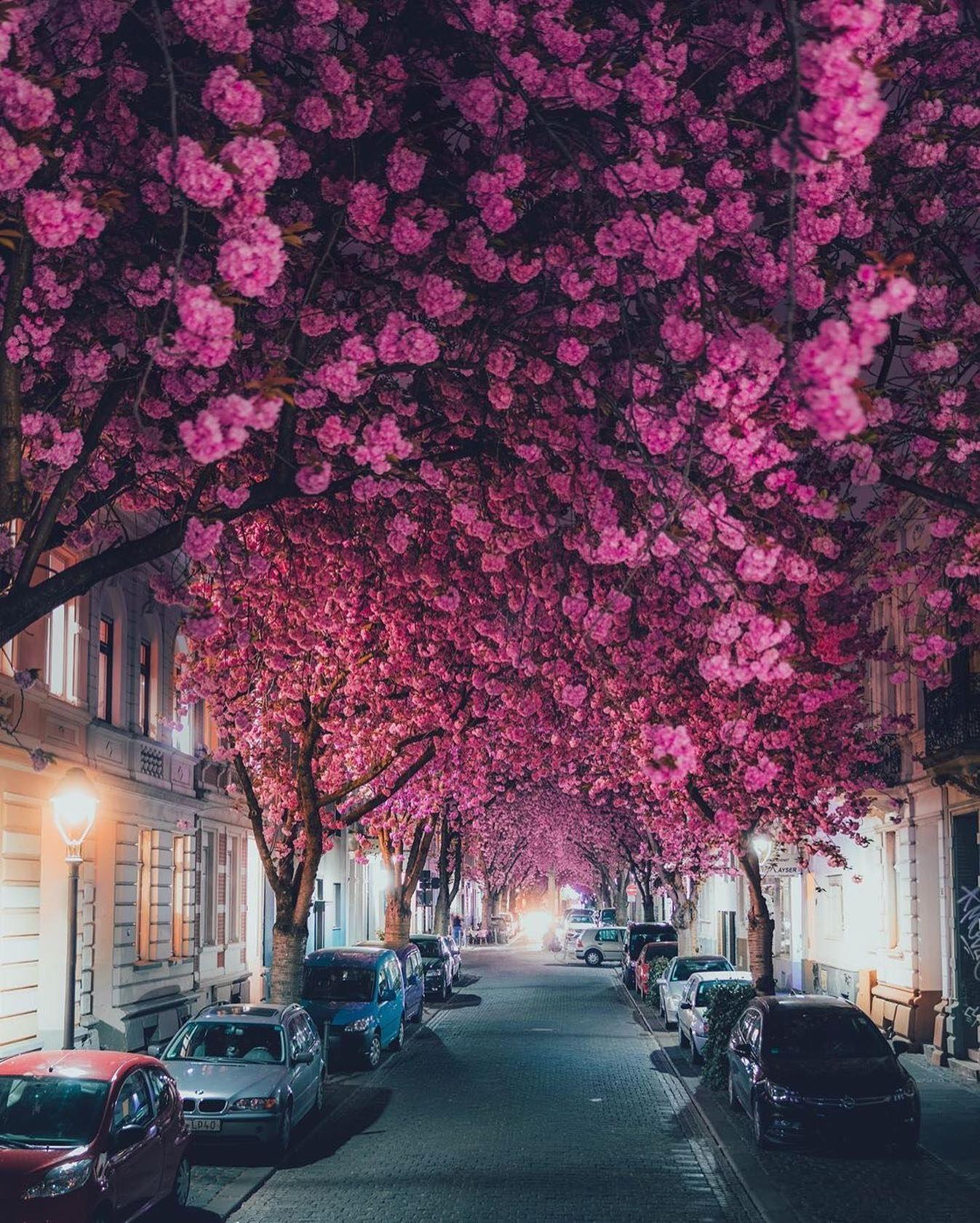 The beauty of spring season 🌸• Planet Earth 📷 @lennart # ...