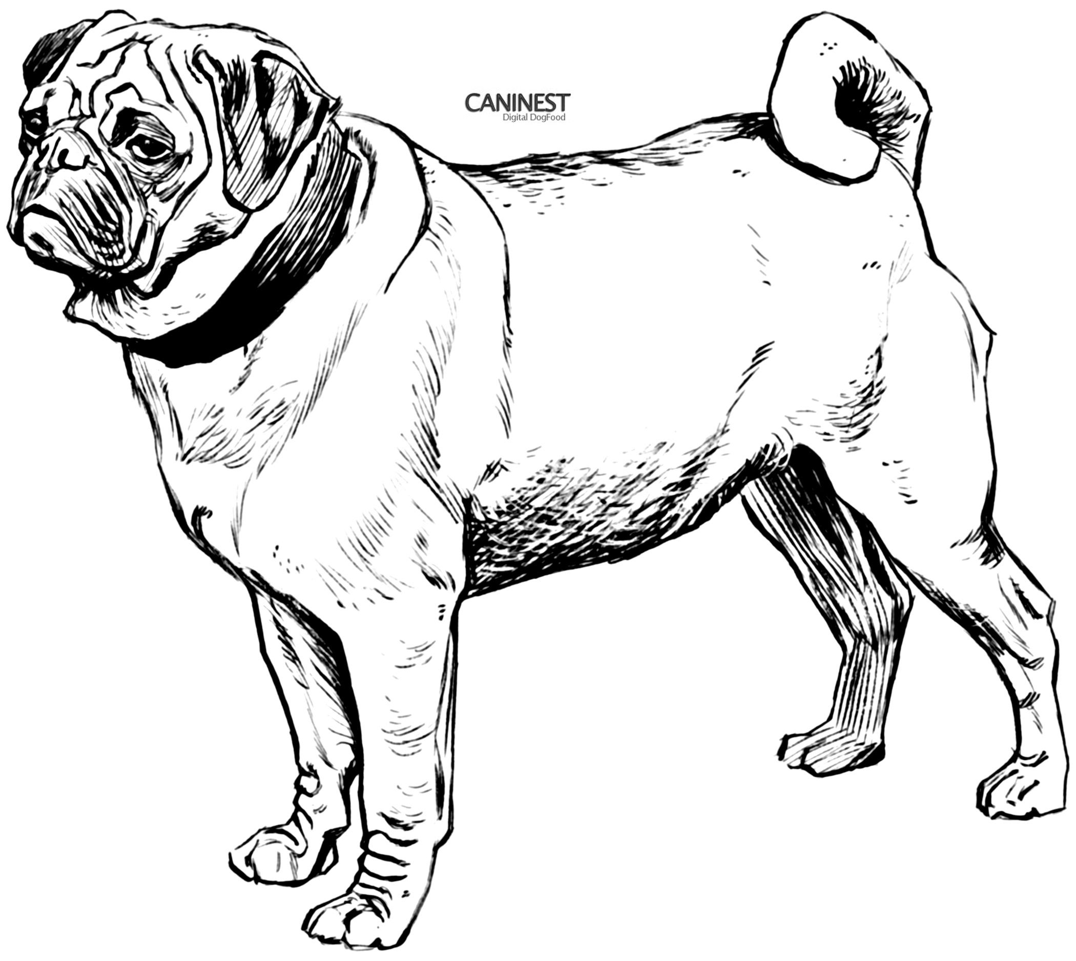 Mopshond Pets Kids Coloring Pages Printouts Learning