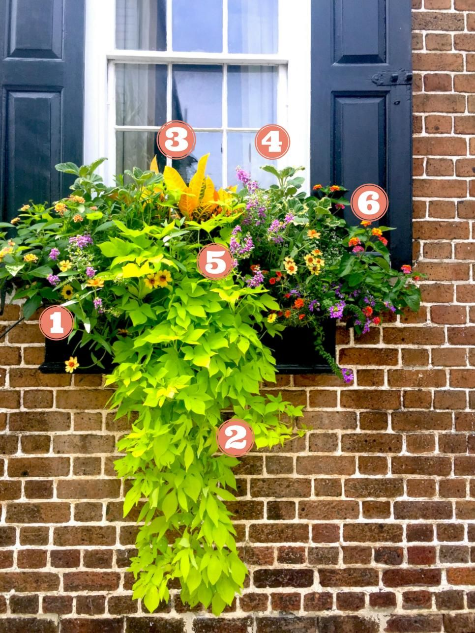 15 Simply Stunning Summer Window Boxes | Plants, Flowers ...
