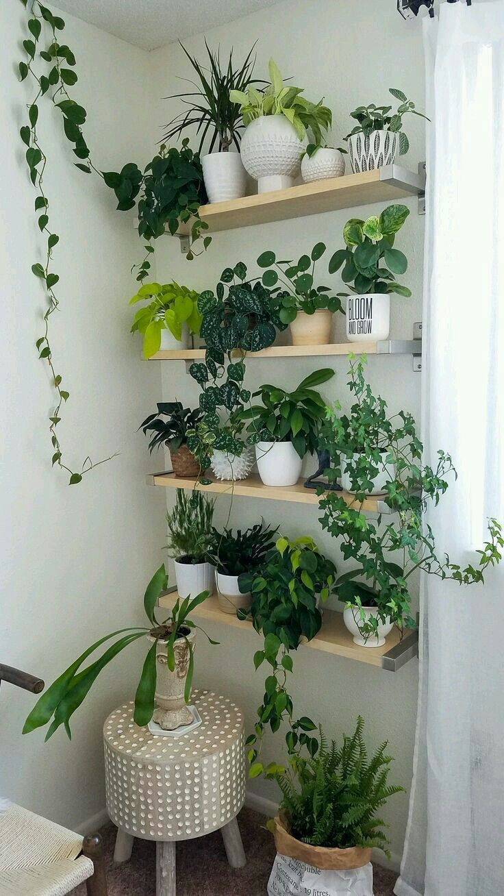Pin by spiffyjiffytiffy on House | Plant decor indoor ...