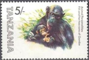 Chimpanzee (Pan troglodytes), Fifi with Young - Gombe