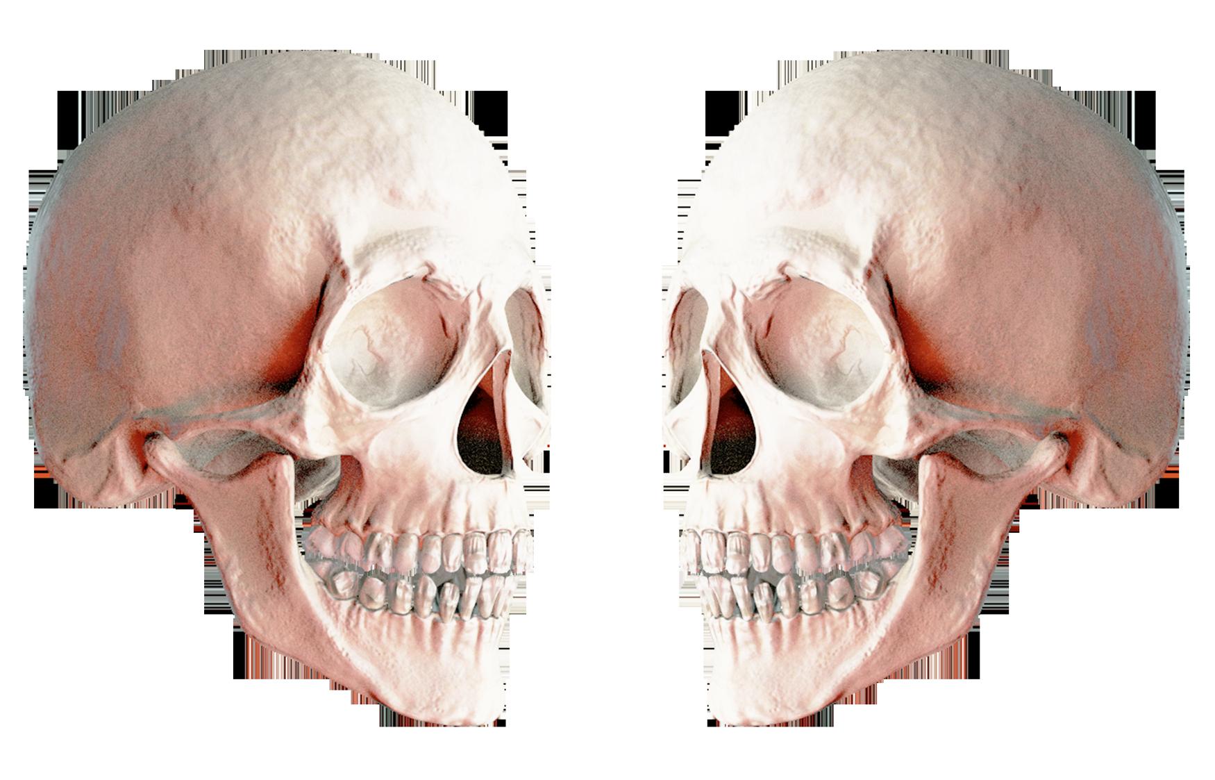 Skull Png Image Skull Human Skull Png Images