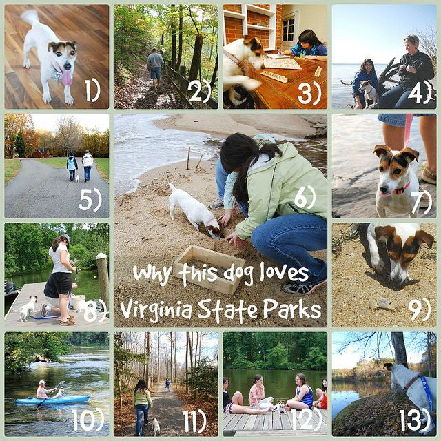 """""""Why this dog loves Virginia State Parks"""" Junie shares some of the reasons she loves Virginia State Parks. http://www.virginiaoutdoors.com/article/more/5188"""