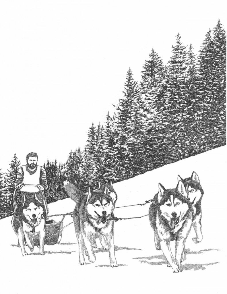 sled dogs psy germany colouring pintura dog norway deutsch - Husky Coloring Pages