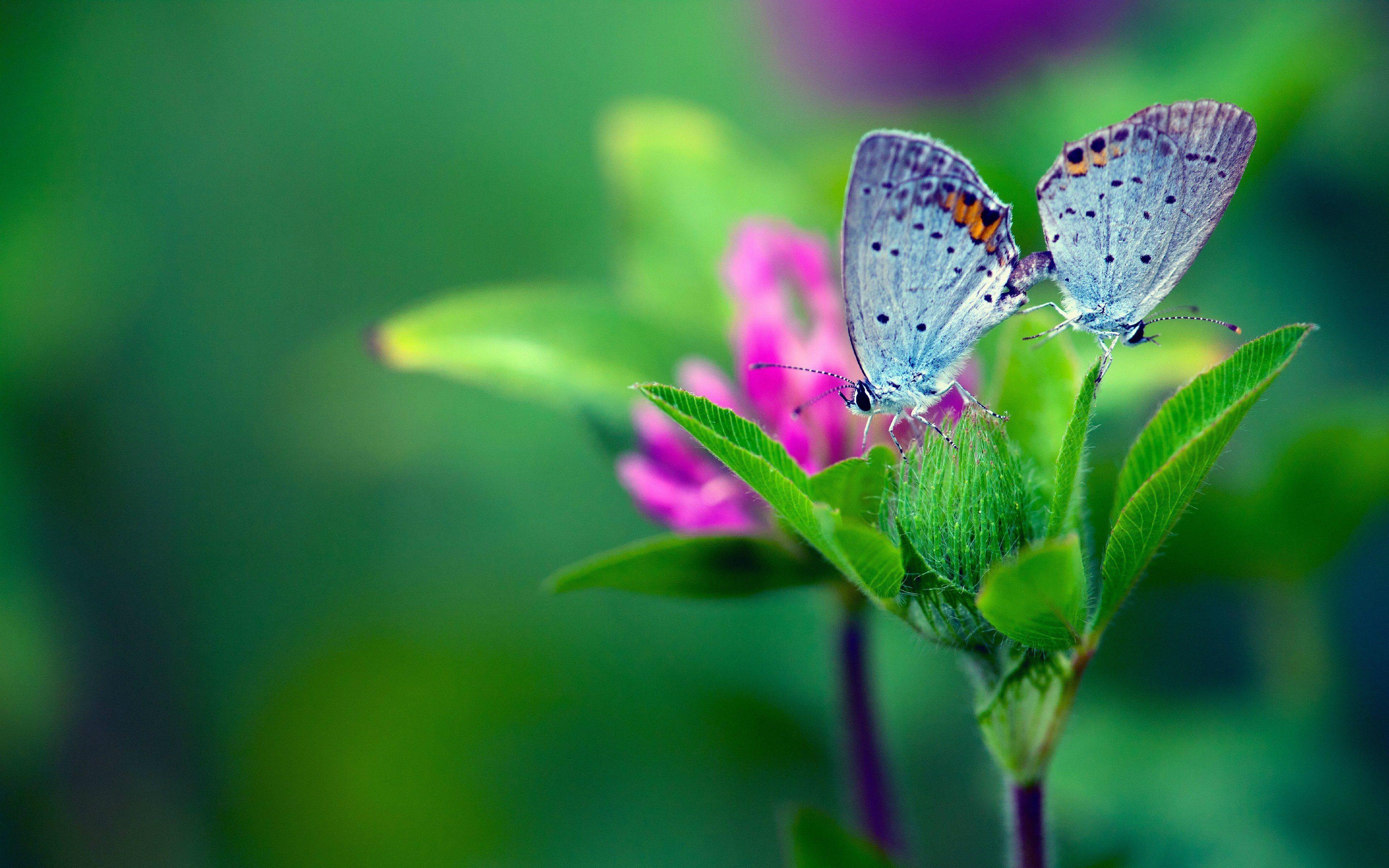 butterfly flower garden 4k wallpaper hd download desktop