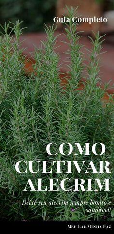 Alecrim: como plantar e cuidar de alecrim em uma horta caseira. Veja o guia completo para cultivar alecrim em casa ou em apartamento. Deixe sua plantinha aromática e sempre verde! confira as dicas no blog #jardim #horta #herbs