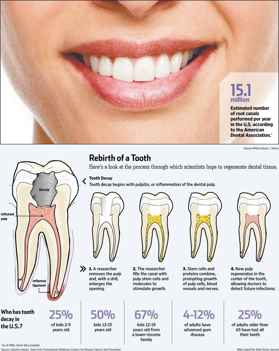 human teeth Google Search