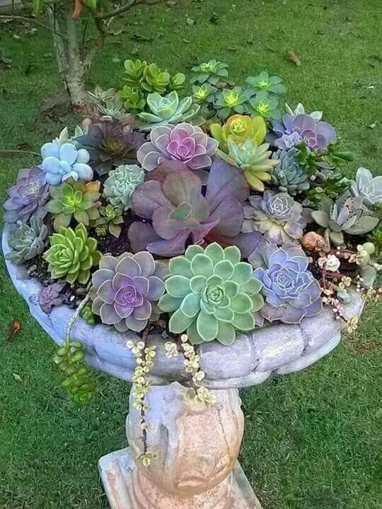 Succulents in birdbath #containergardeningideashangingbaskets - maceteros para jardin