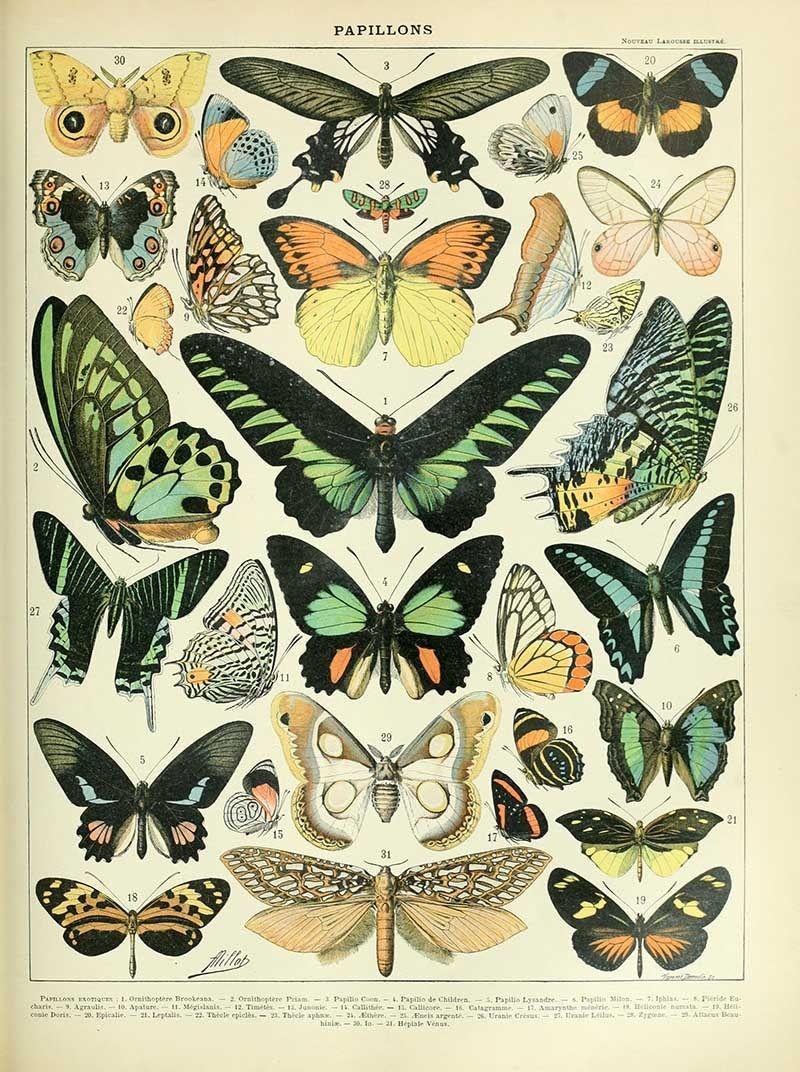 "Haeckel Moth Scientific Illustration Print Art Forms of Nature 4 x 6/"" 16 x 20/"""