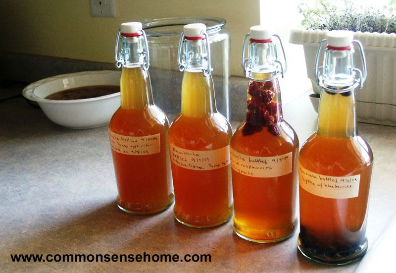 Brew Your Own Kombucha – Which Brew is Right for You?