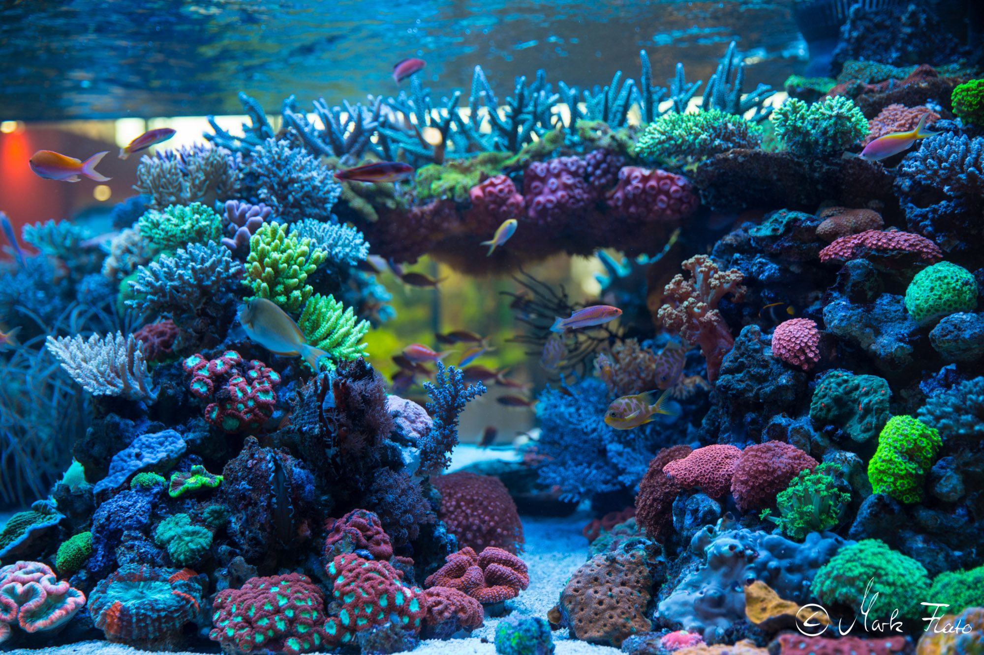 fish coral reef decor double decoration ocean p ebay aquarium s vepotek seabed sides background