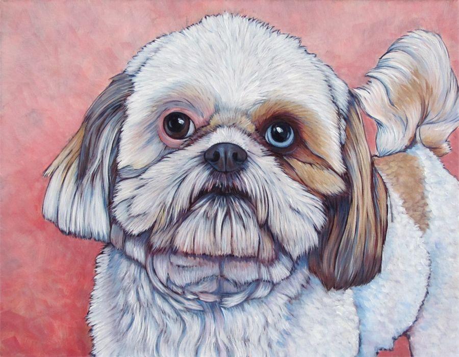 Mr Bean The Shih Tzu Pet Portrait Painting Custom Pet Portraits Pet Portraits