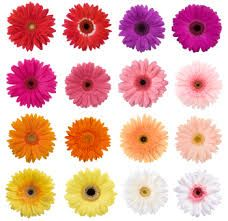Pin By Belak Flowers Wilmington De On February Wedding Flowers In Season Uk Winter Spring Inspiration Gerbera Daisy Wedding Flowers Daisy Wedding Flowers Gerbera Daisy