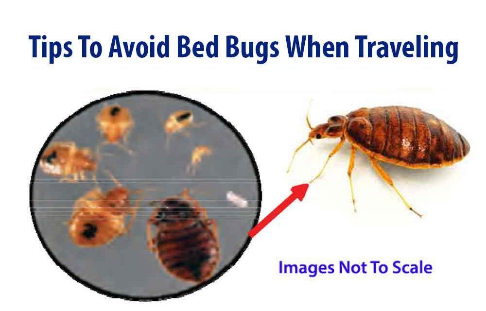 f559267d0ba2a026235d2126629d0214 - How To Get Rid Of Bed Bugs While Backpacking