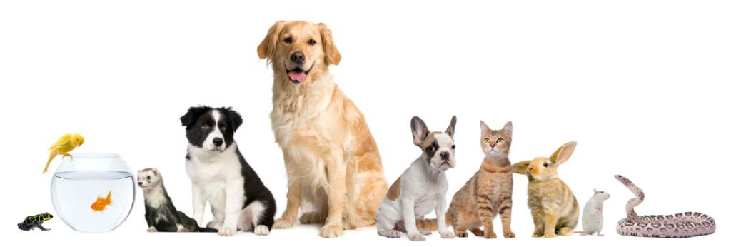 Geelong Vet Emergency And First Aid Basics Cat Illnesses Pets Pet Supplies