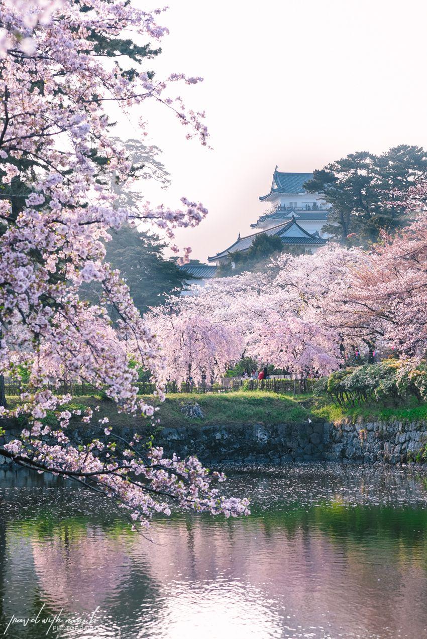 Cherry Blossoms Odawara 6 Cherry Blossom Japan Japan Photography Tokyo Cherry