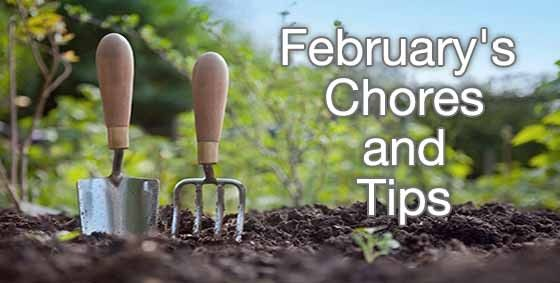 A Homesteader's Veggie Garden Preparation February Chores - http://www.homesteadingfreedom.com/a-homesteaders-veggie-garden-preparation-february-chores/
