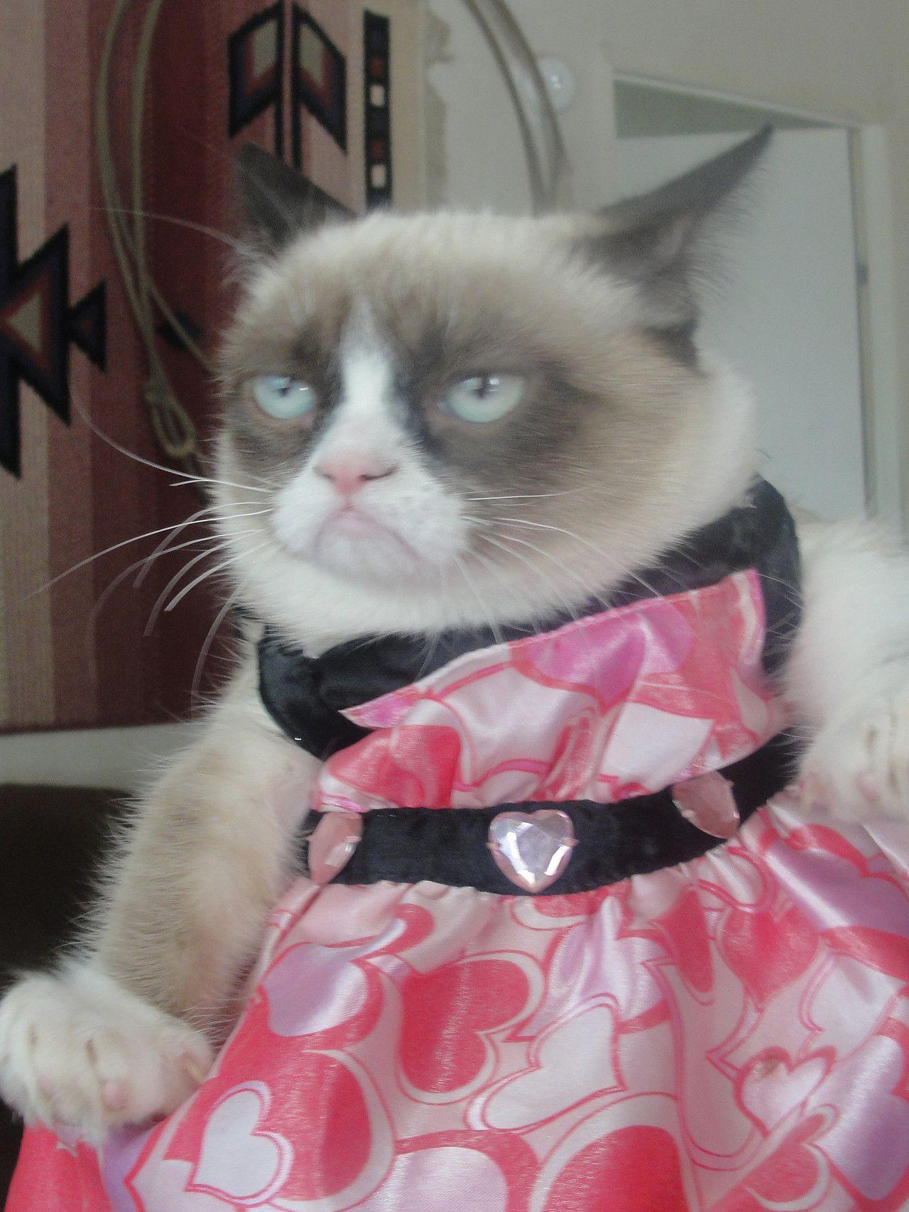 (UN)HAPPY HALLOWEEN FROM GRUMPY CAT Funny grumpy cat